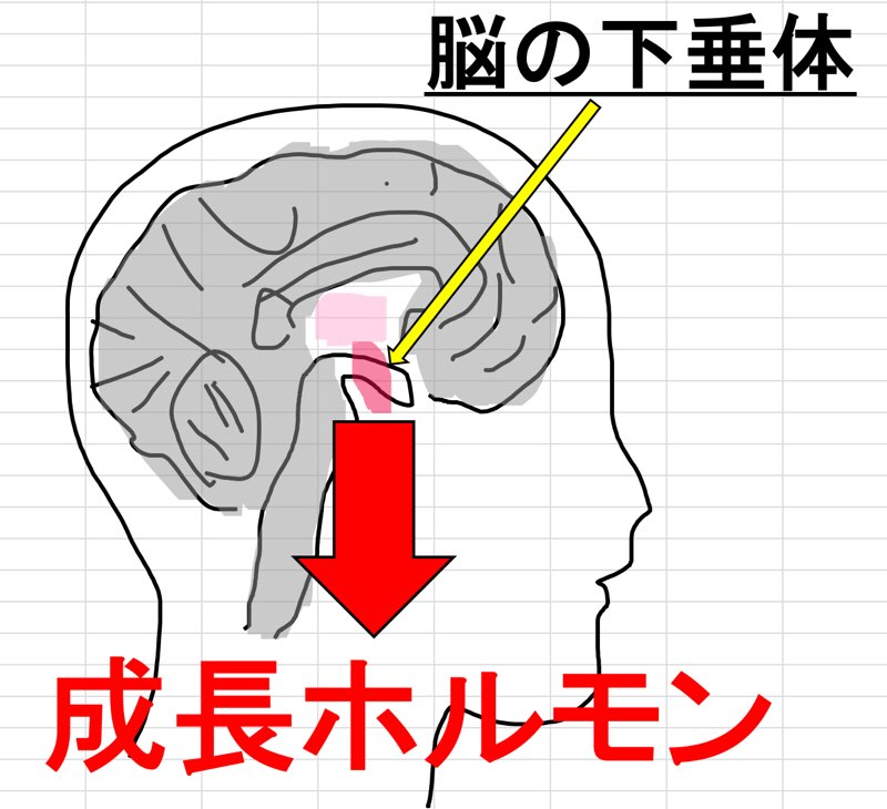 成長ホルモンと脳下垂体