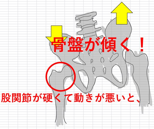 股関節と骨盤の関係