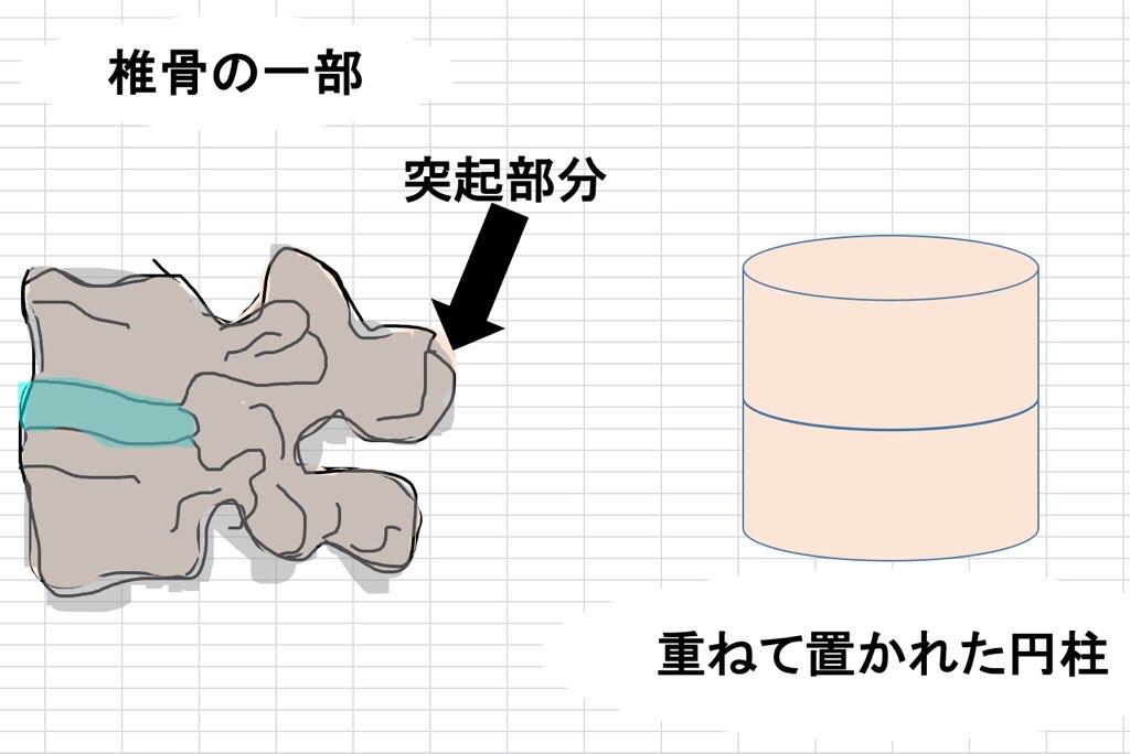 椎骨と円柱