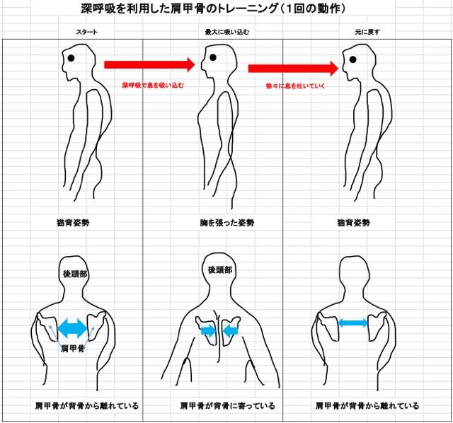 深呼吸と肩甲骨トレーニング