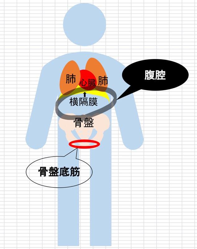 腹腔と腹圧