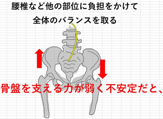 腰椎-骨盤