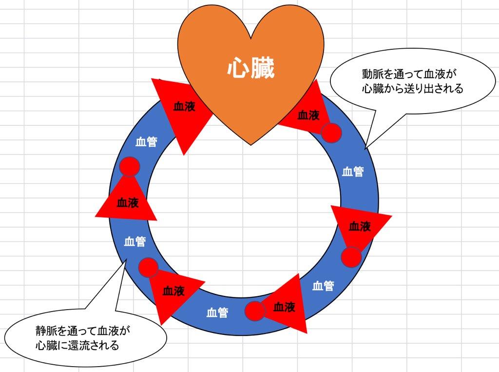 心臓のポンプ作用