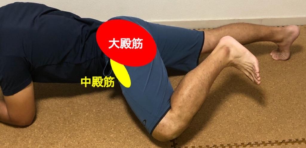 大殿筋など臀部の筋肉