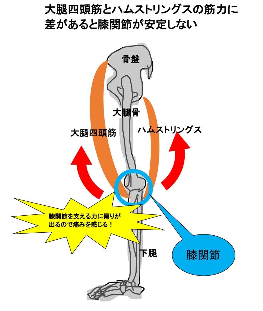 大腿四頭筋とハムストリングスが膝関節を支える