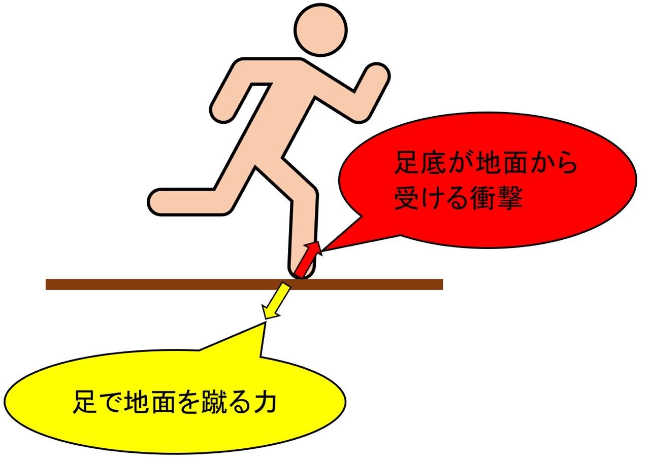 足底アーチの緩衝作用