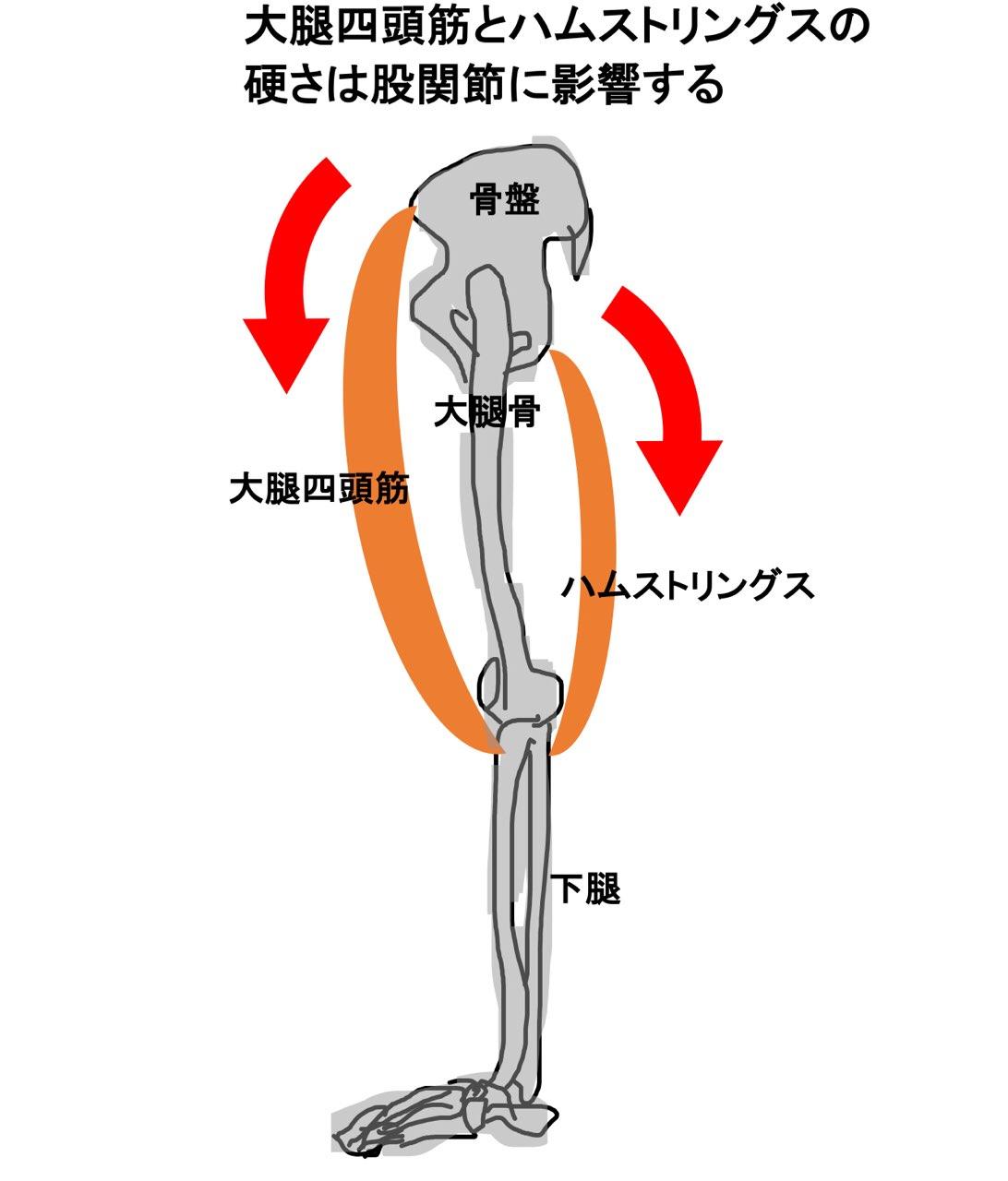 大腿四頭筋とハムストリングス