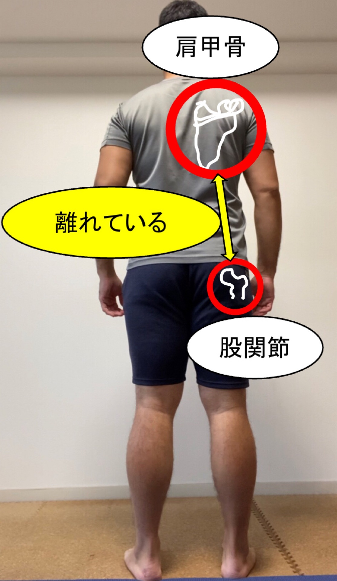 肩甲骨と股関節の関係