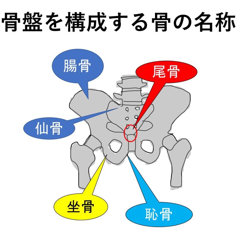 骨盤を構成する骨