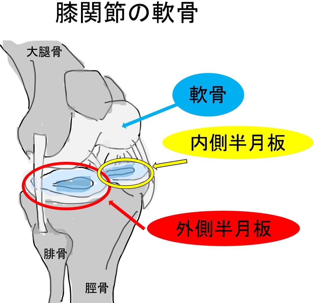 膝関節の軟骨と半月板