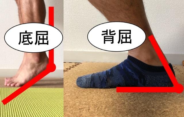 足首の底屈と背屈