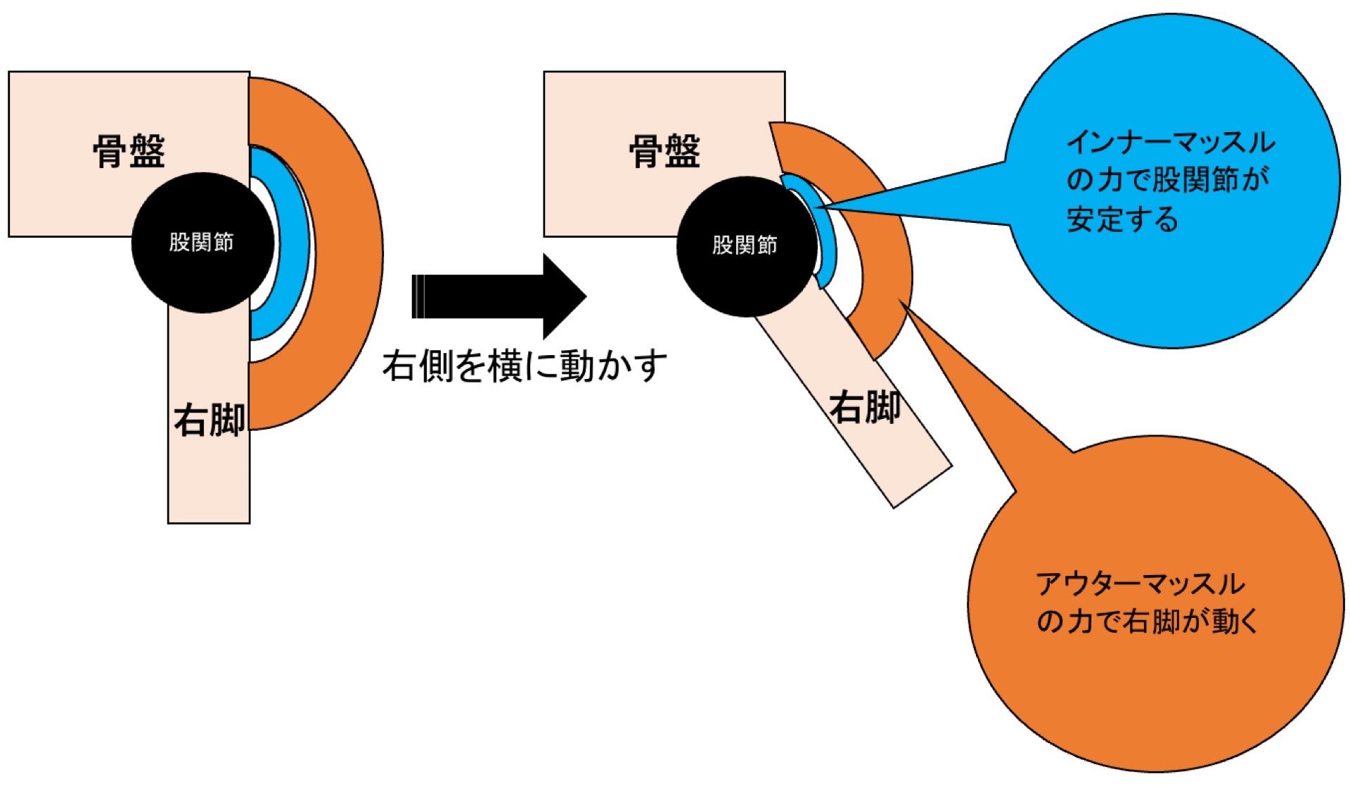 インナーマッスルの役割イメージ