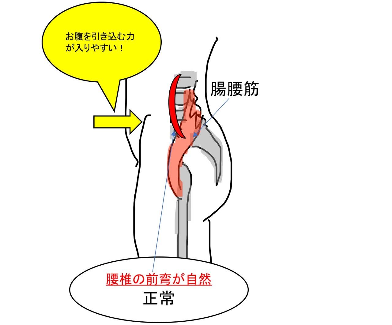 腰椎の自然な前弯